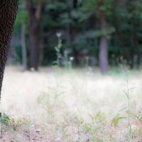 Costes-Cirgues, garrigue et forêt autour des parcelles